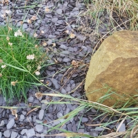The Rock in the Hard Place: the IAPT standards